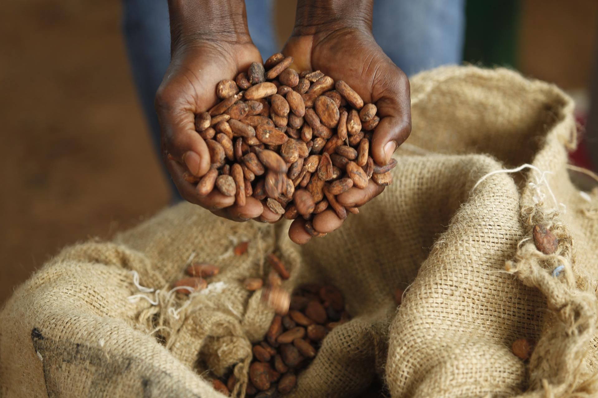 cocoa beans in hands