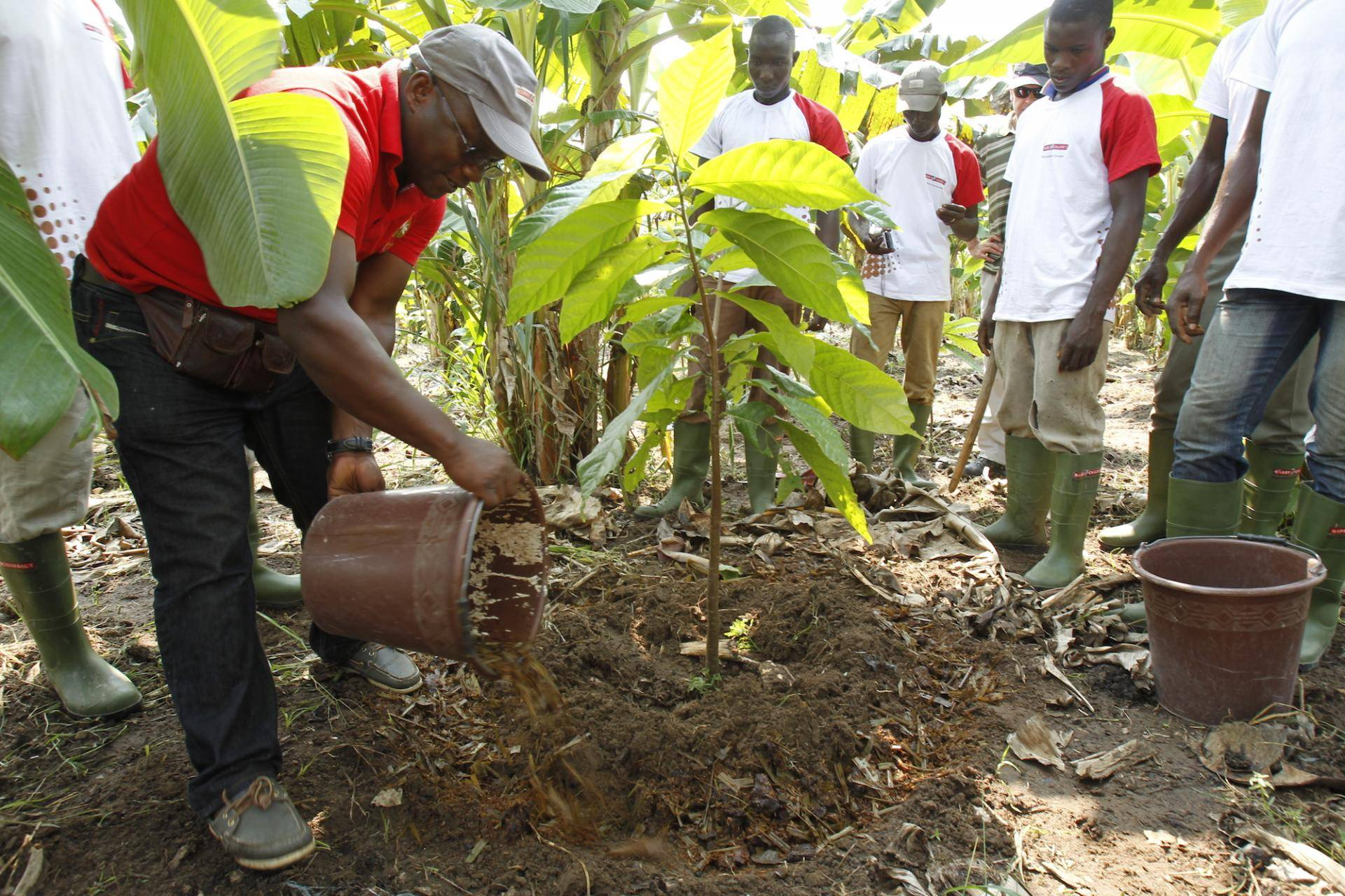 Cocoa farmers in West Africa