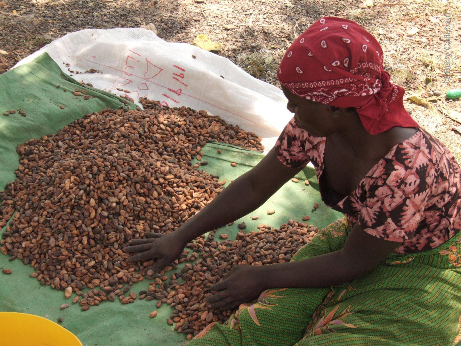 cocoa farmer woman