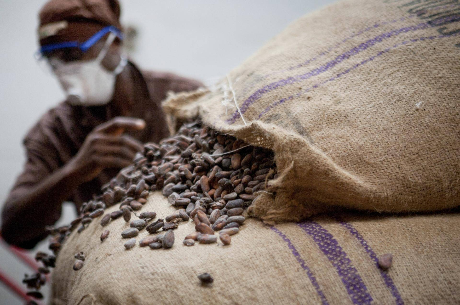 Cocoa sourcing and processing in Africa during times of COVID-19