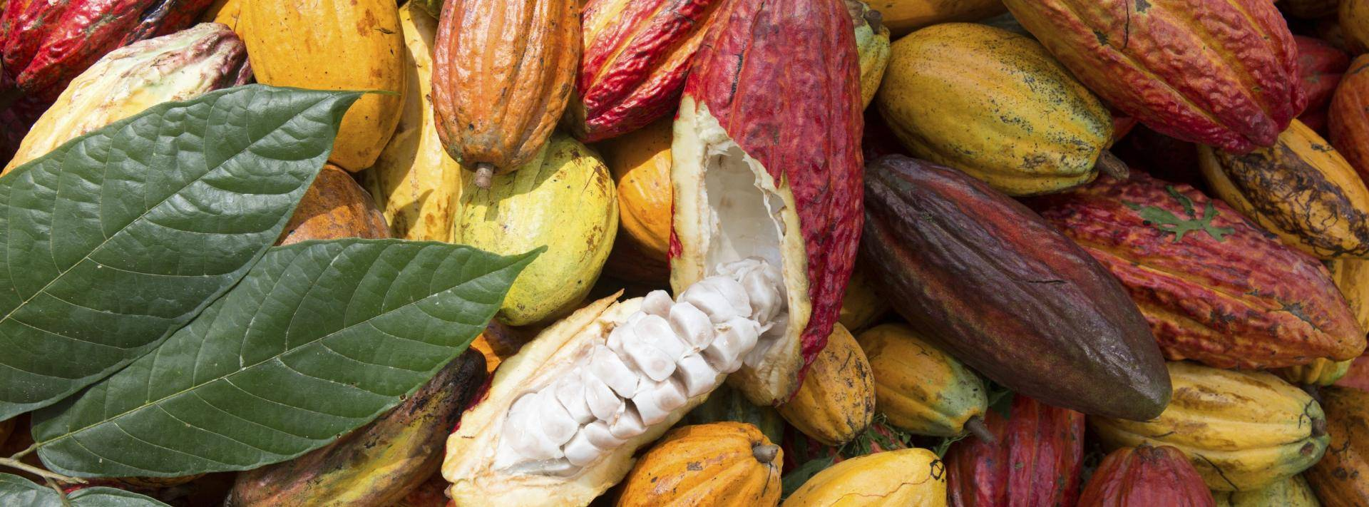 Traceable cocoa for chocolate