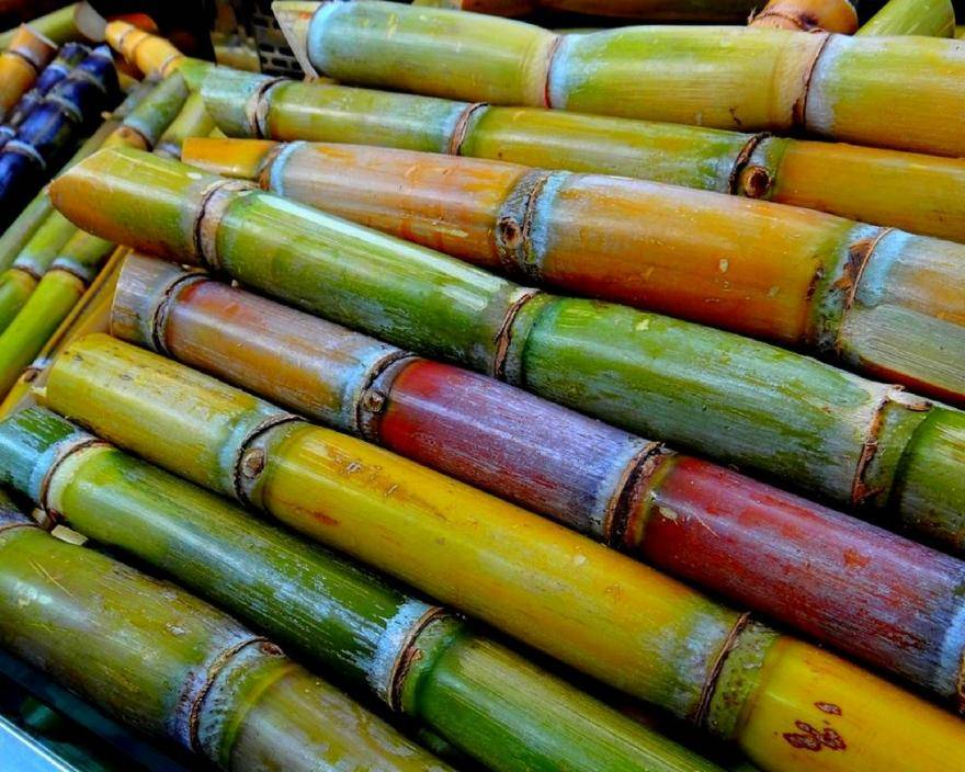sustainable cane sugar