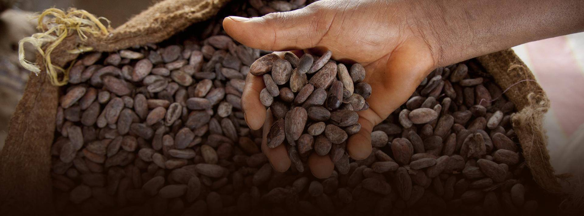 Bensdorp – Masters of Cacao since 1840