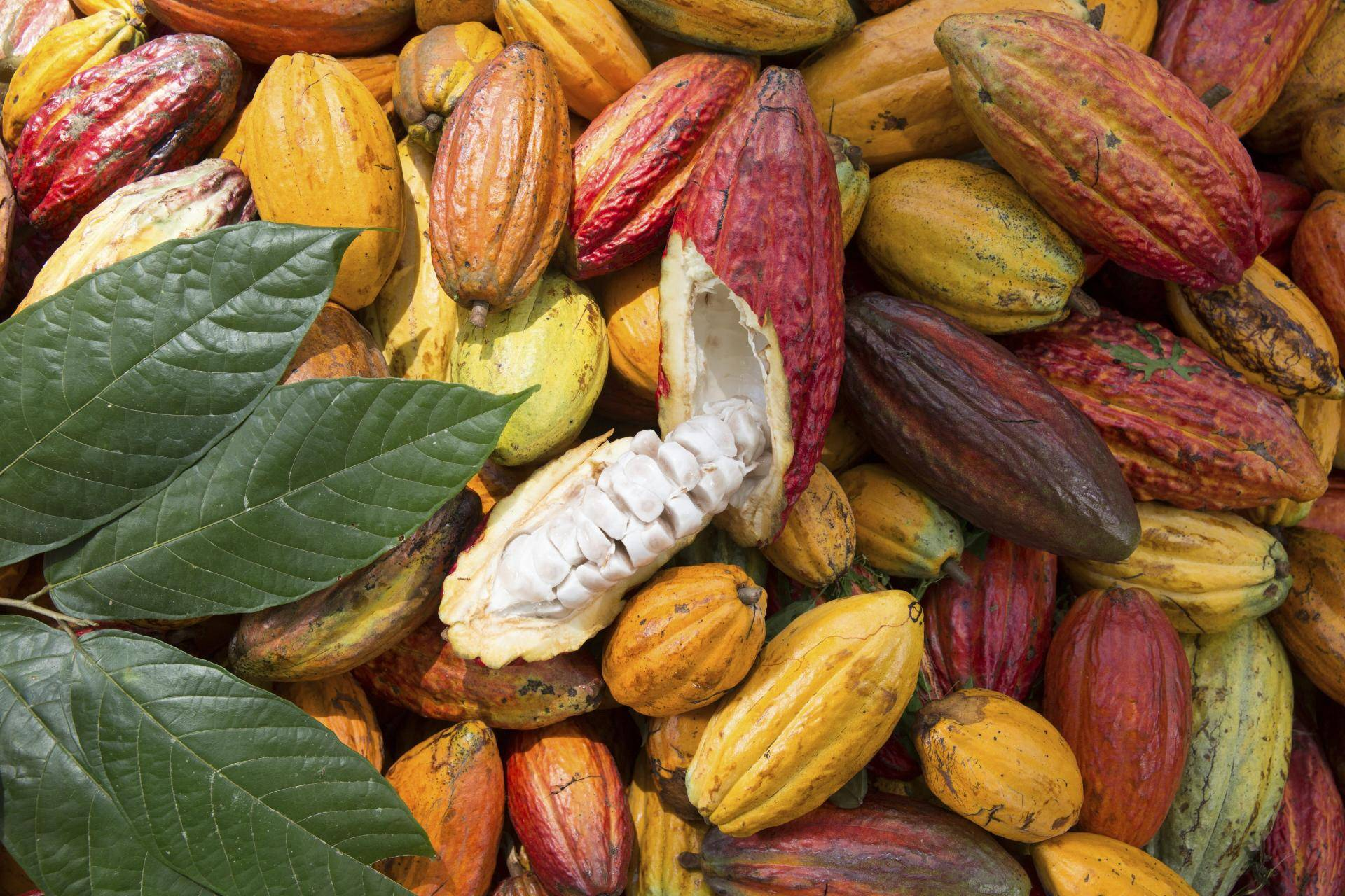 Barry Callebaut launches Cocoa Horizons Inside, a new segregated and traceable sustainable cocoa mass offer.