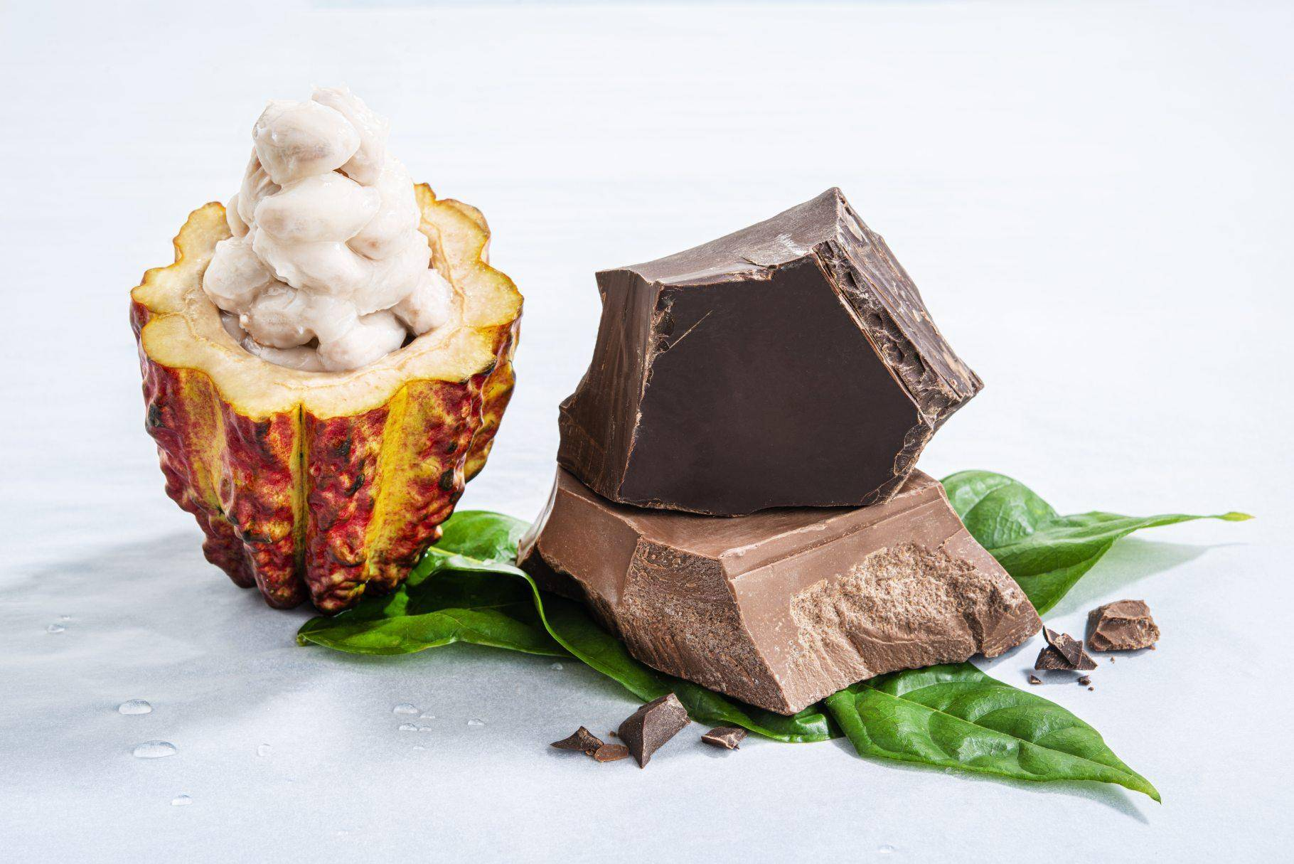 Barry Callebaut Annual Report 2019-20 Sustainability
