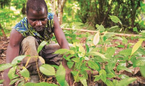 Cocoa Horizons - improving agricultural practices