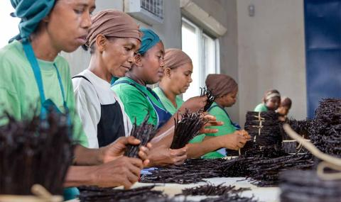 Women packing vanilla in Madagascar