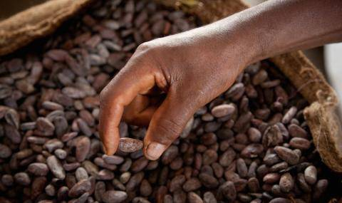 Over CHF 20 million premiums paid to cocoa farmers in FYR 2014/15