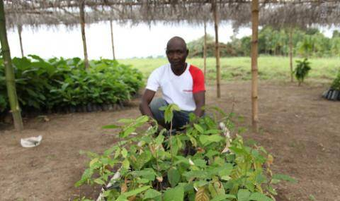 Cocoa farmer with seedlings