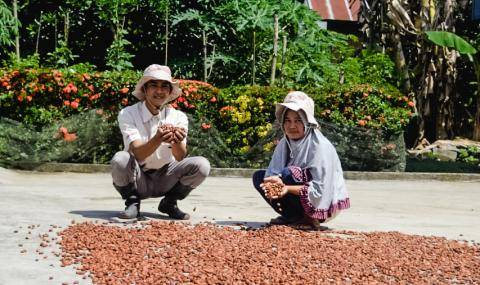 Cocoa Horizons in Indonesia