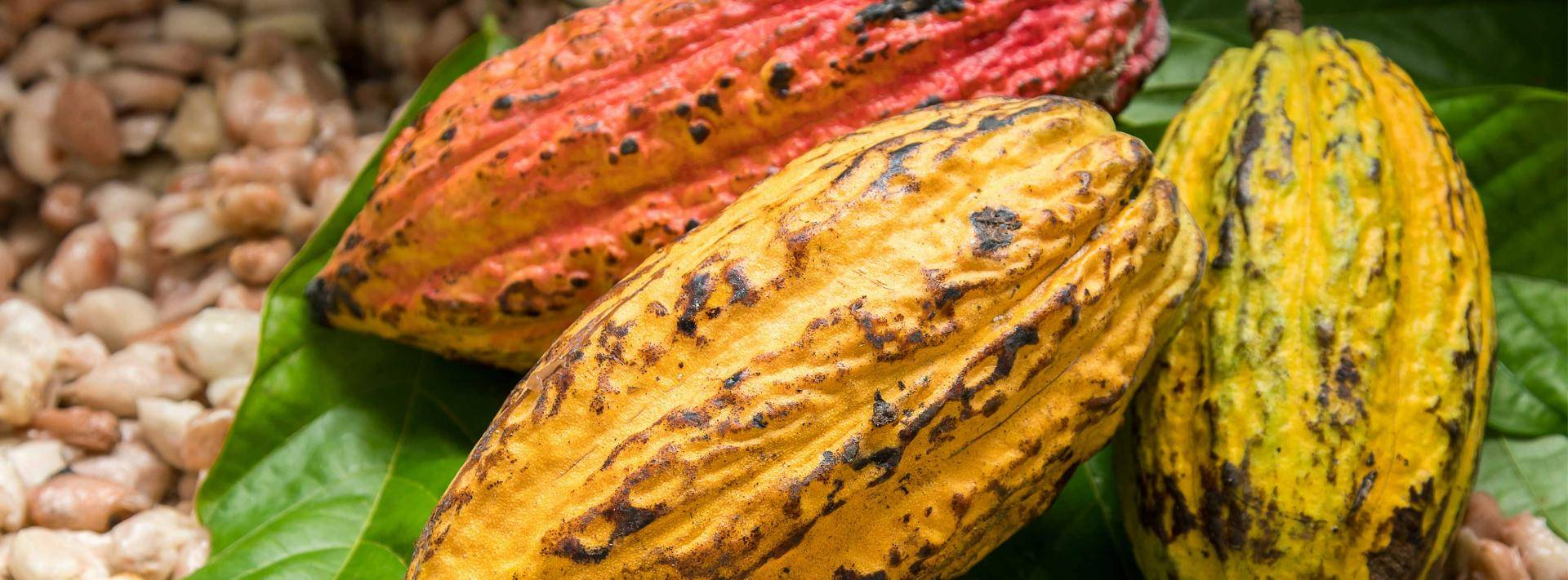 Organic Cocoa Beans and Nuts