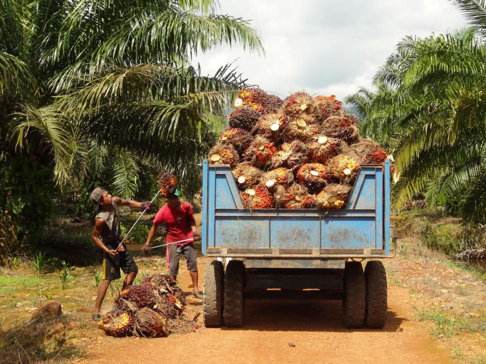 sustainable ingredients - palm oil