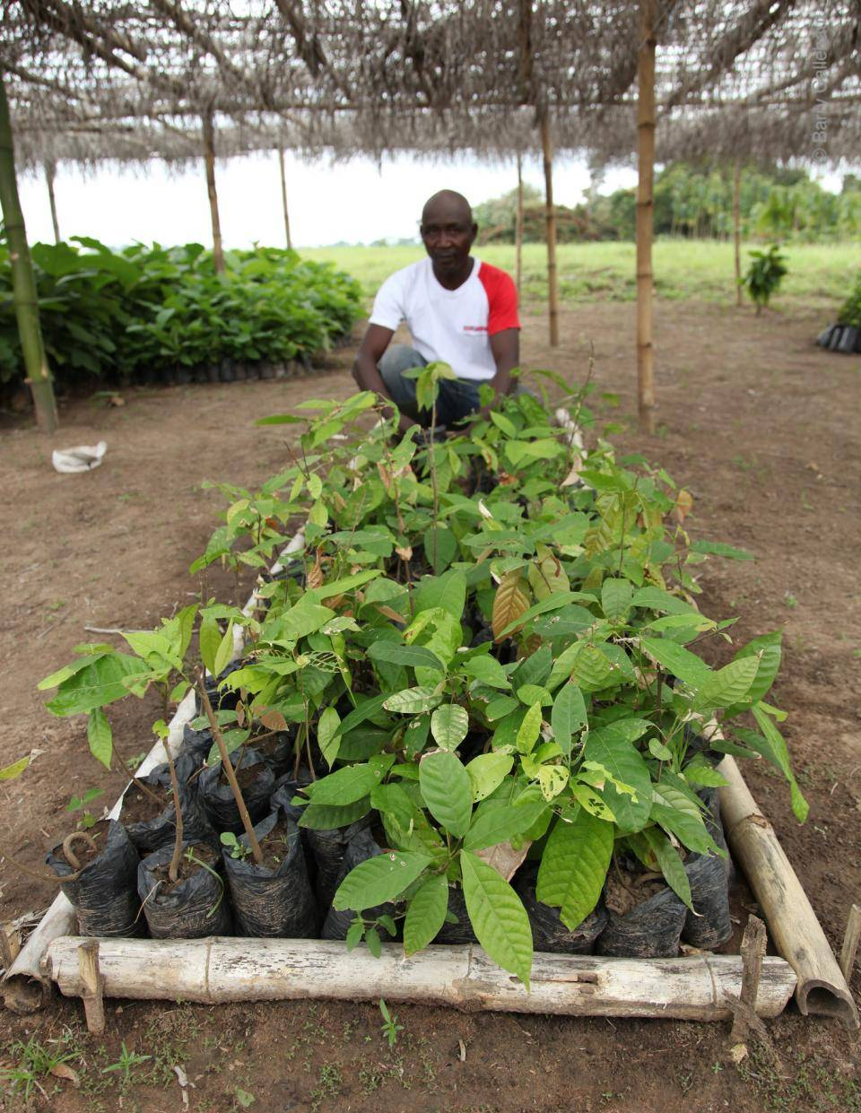 Farmer with a batch of seedlings