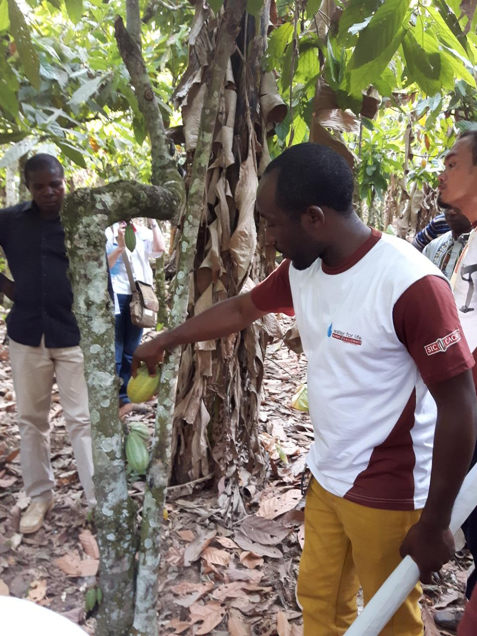 Barry Callebaut Water for Life champions during Cameroon cocoa study tour - visiting a cocoa farm in Penja