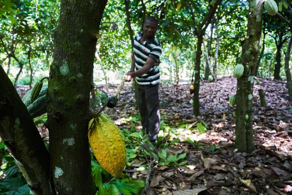 agroforestry and biodiversity