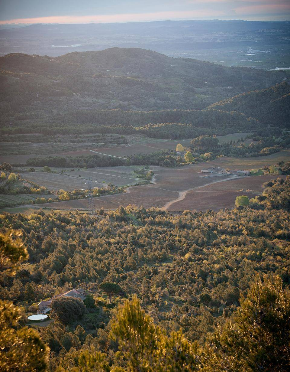 Almond orchards in Spain