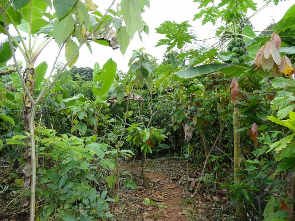agroforestry barry callebaut