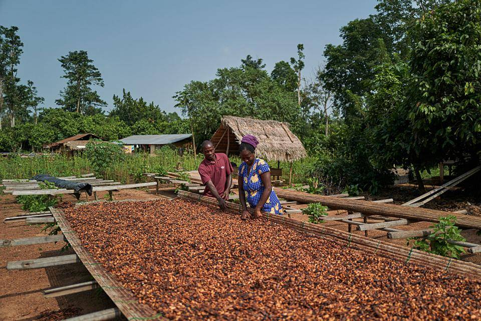 Esther and her husband Kofi checking cocoa beans