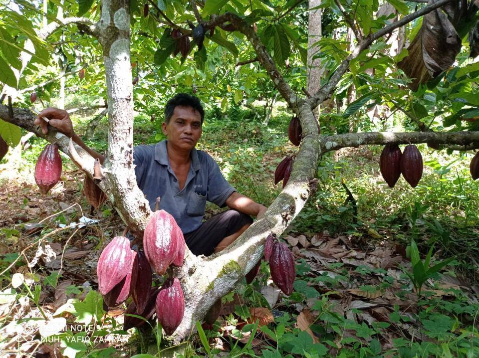 Usman, farmer, in his cocoa plantation