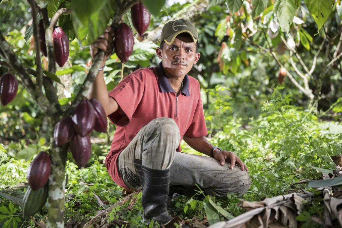 Boosting cocoa cultivation Brazil