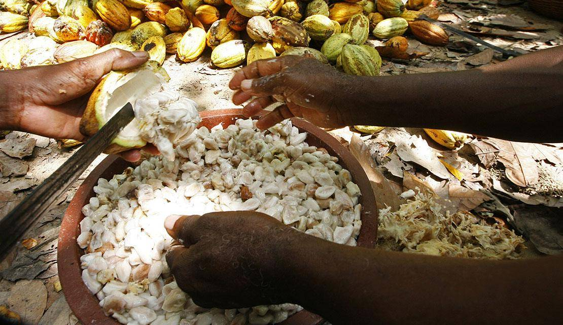 Blending the finest West-African cocoa beans
