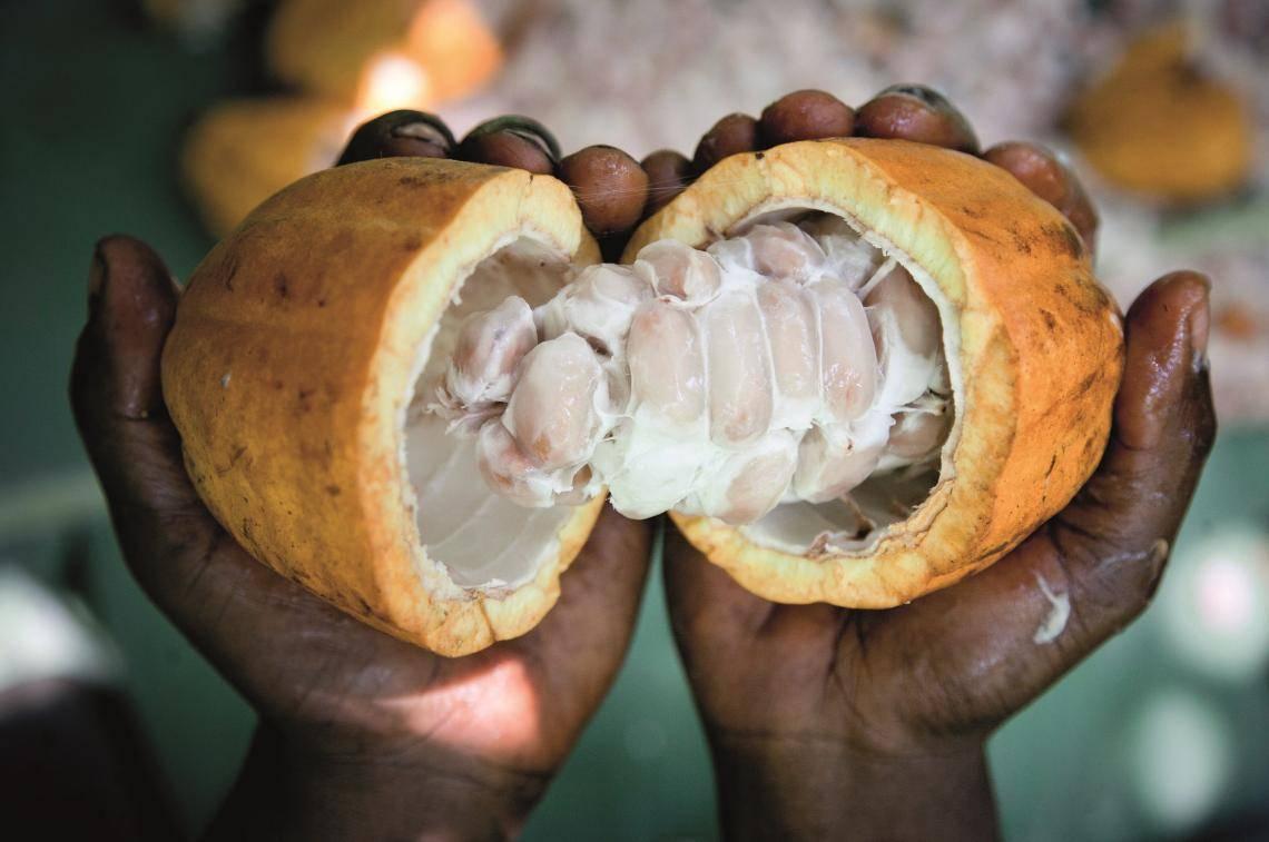 Carma, Cocoa pod