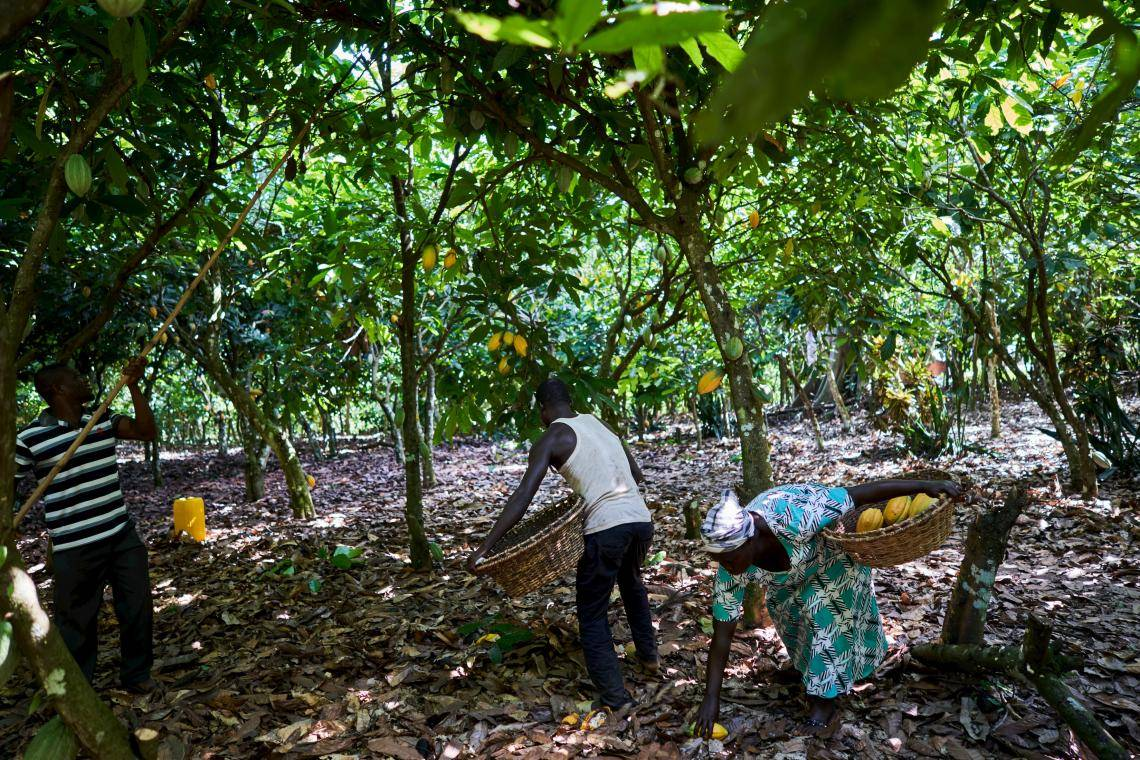 carbon reduction in cocoa supply chain