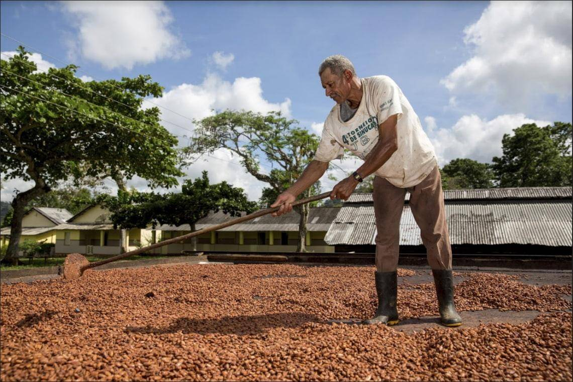 Cocoa farmer in Brazil