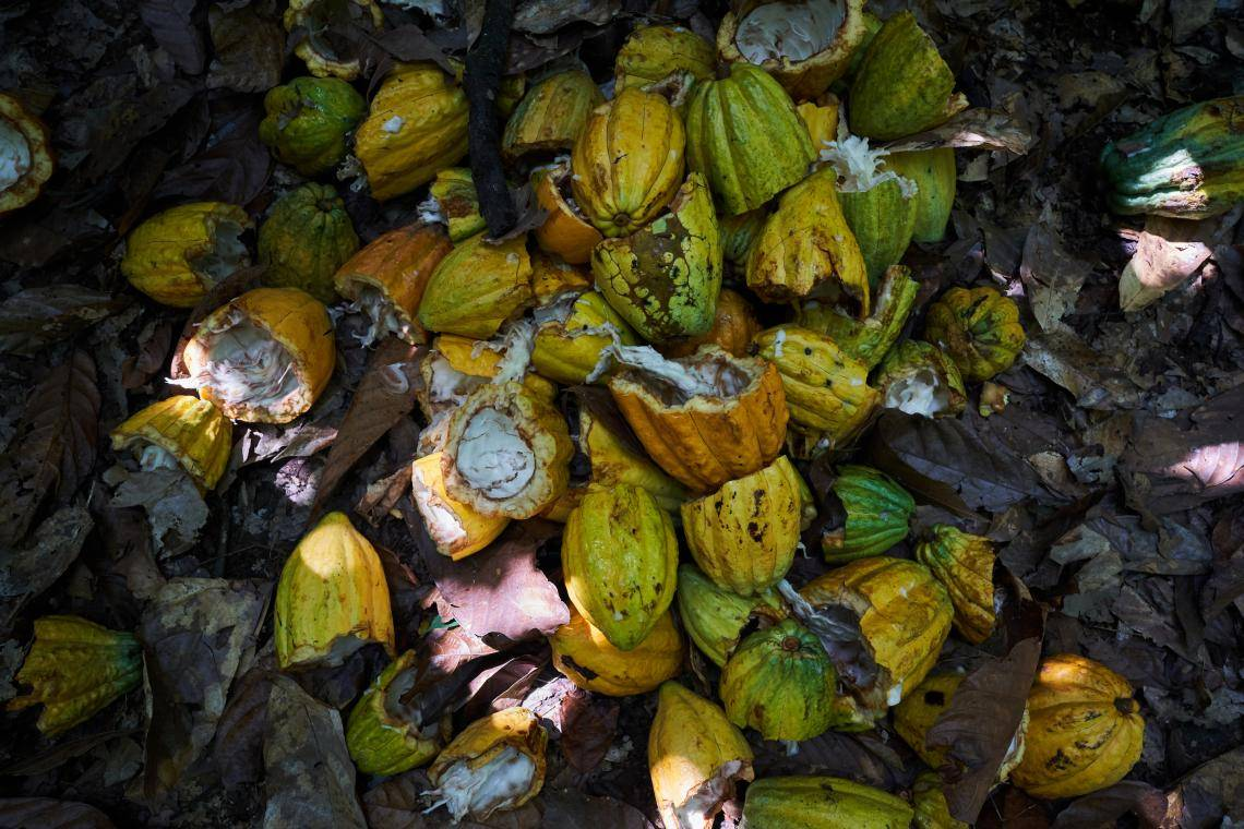 At farm level, agricultural residues such as cocoa pod husks or pruning material will be trialed to create biochar.