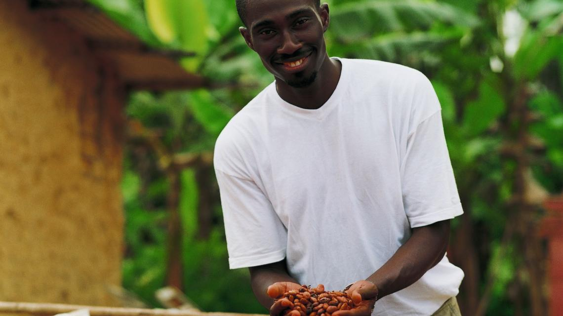 Farmer drying cocoa beans