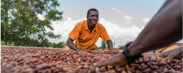 Barry Callebaut cocoa farmers drying cocoa beans