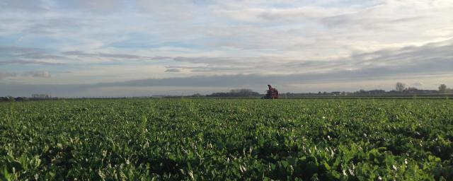 Barry Callebaut - Sustainable sugar beet plantation