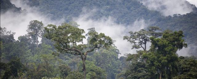Rainforest in Cameroon - Barry Callebaut has committed to become forest and carbon positive by 2025