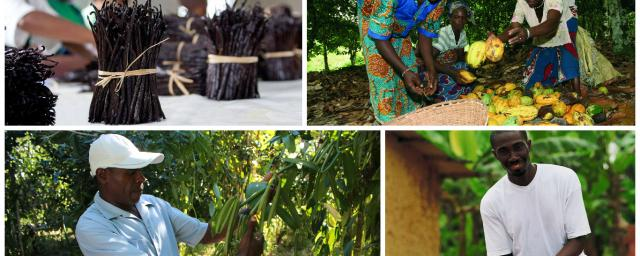Barry Callebaut and Prova to launch joint project empowering vanilla farmers