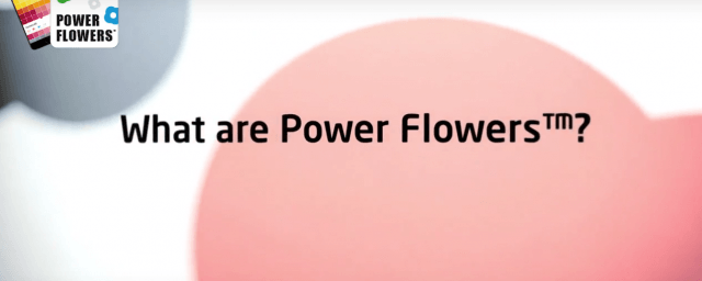 What are power flowers