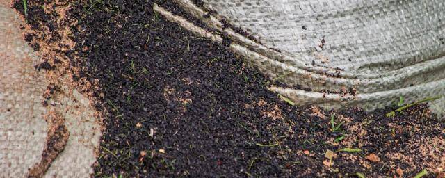 Biochar: the power to reduce carbon emissions